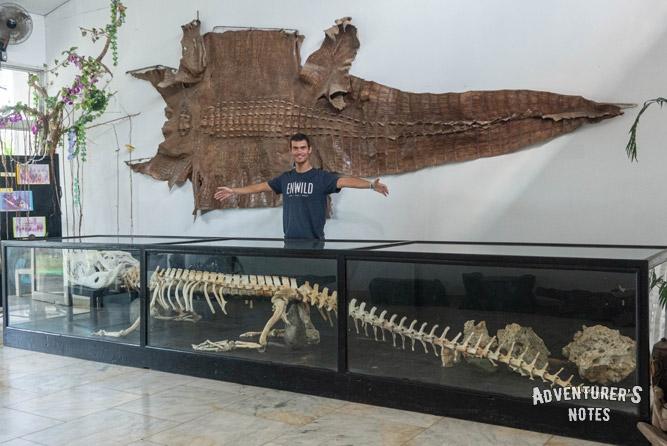 Crocodile Lolong's Skeleton in Bataraza Province, Palawan