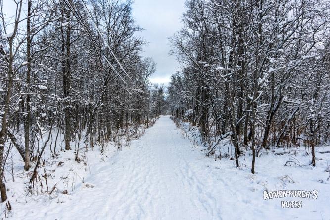 Лыжная тропа